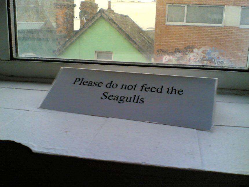 Don't Feed the Seagulls